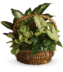 Emerald Garden Basket from McIntire Florist in Fulton, Missouri