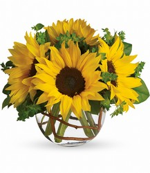 Sunny Sunflowers from McIntire Florist in Fulton, Missouri
