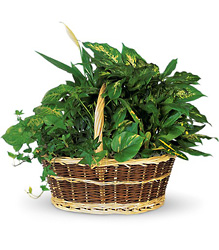 Green Garden Basket  from McIntire Florist in Fulton, Missouri