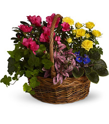 Blooming Garden Basket from McIntire Florist in Fulton, Missouri