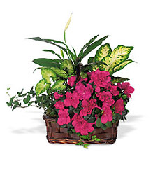 Azalea Attraction Garden Basket from McIntire Florist in Fulton, Missouri